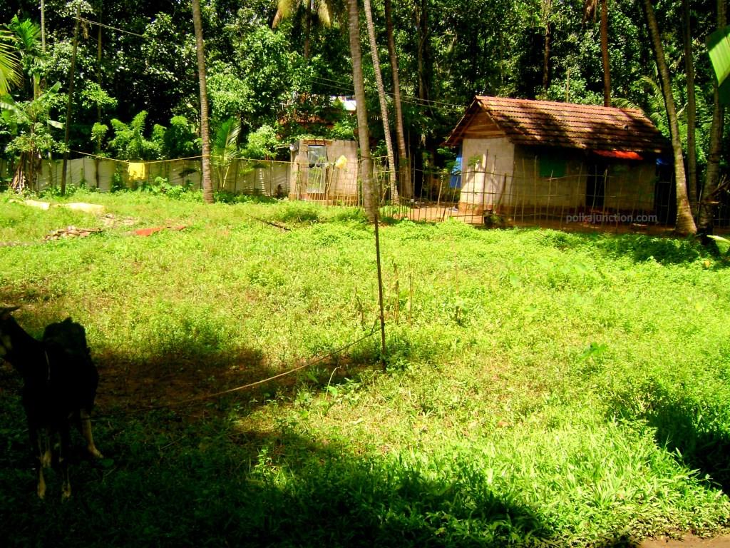 A typical village in kerala backwaters